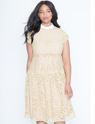 Lace Trumpet Dress with Poplin Collar